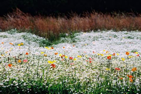 2010-05-16nikon_05.jpg