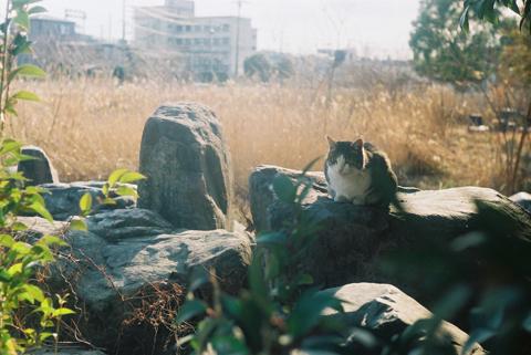 20110126_ねこ002.jpg