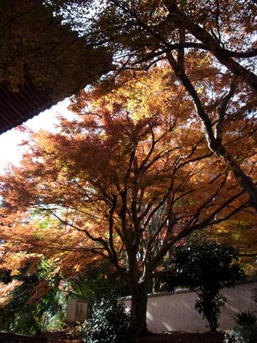 20111204久安寺_3.jpg