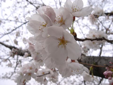 2011_0402_07.jpg
