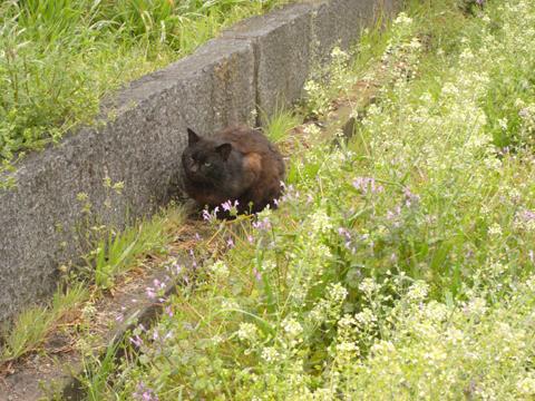 2011_04_09_19.jpg