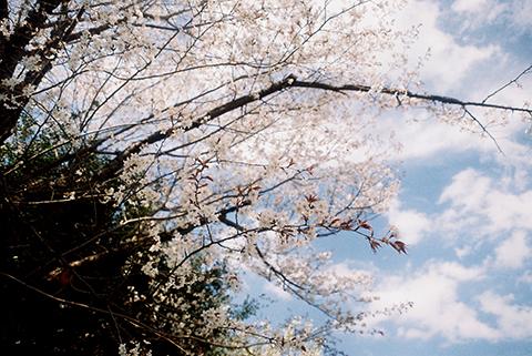 2014_04_02_Foca2.jpg