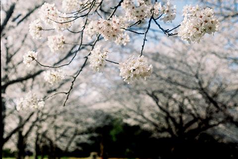 2014_04_02_Foca6.jpg