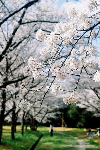 2014_04_02_Foca7.jpg
