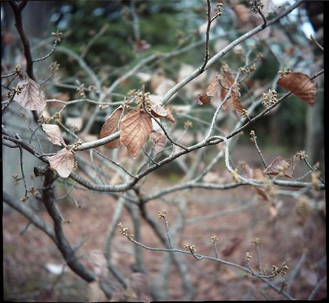 Brown_2012_winter004.jpg