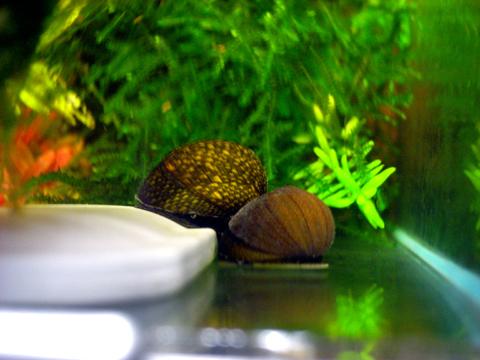 石巻ペアの貝殻.jpg