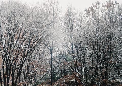 20110210雪景色s.jpg