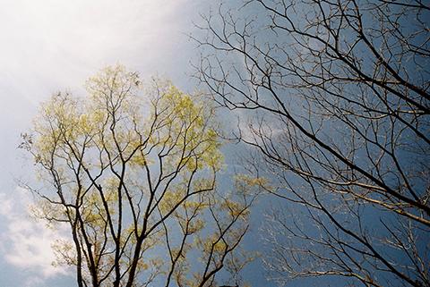 2014_04_02_foca1.jpg
