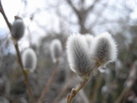 blog_20100220_2b.jpg
